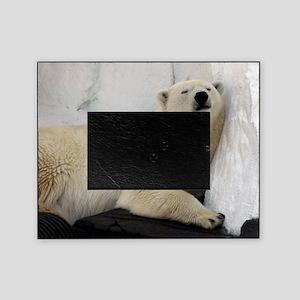 Polar Bear looking sleepy 2 Picture Frame