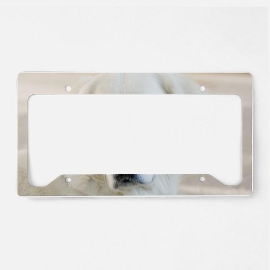 dreamstimefree_2397201 License Plate Holder