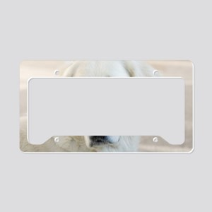 dreamstimefree_2397201 License Plate Holder