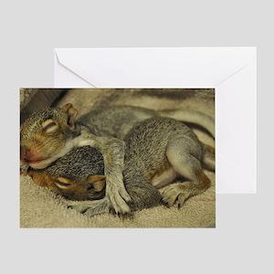 Baby squirrels cuddle L Greeting Card