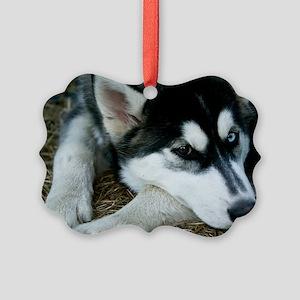 Siberian Husky Dog Picture Ornament