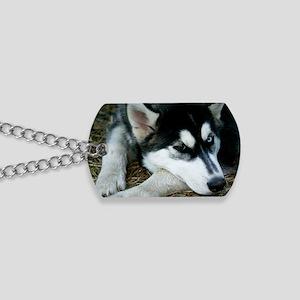 Siberian Husky Dog Dog Tags