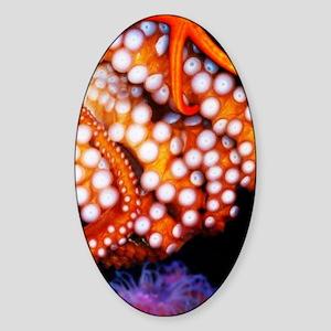 octopus star fish nook Sticker (Oval)