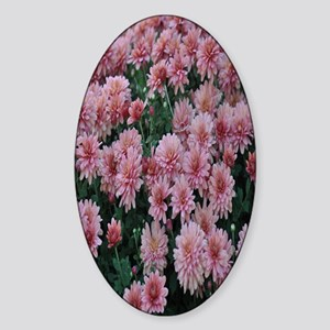 Pink chrysanthemum kindle Sticker (Oval)