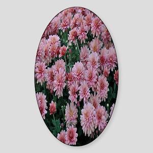 Pink chrysanthemum nook Sticker (Oval)