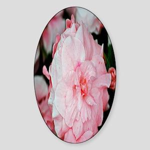 Pink flower nook Sticker (Oval)