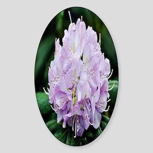 purple flower kindle Sticker (Oval)