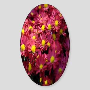 Aster flowers nook Sticker (Oval)