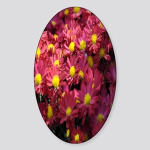 Aster flowers kindle Sticker (Oval)