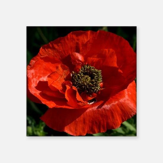"Vibrant Red Poppy Square Sticker 3"" x 3"""