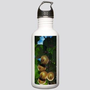 New Zealand, North Isl Stainless Water Bottle 1.0L