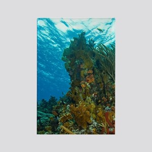 Coral Reef with ship corals, spon Rectangle Magnet
