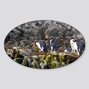 Also known as the Snares Crested Pe Sticker (Oval)