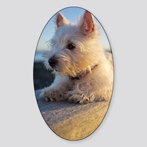 West Highland Terrier puppy on wood Sticker (Oval)