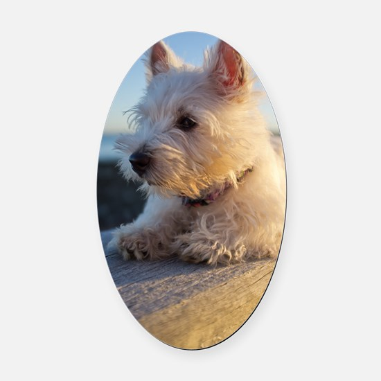 West Highland Terrier puppy on woo Oval Car Magnet
