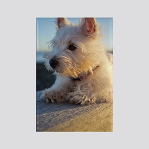 West Highland Terrier puppy on wo Rectangle Magnet