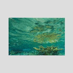 Schooling baitfish, Tortola, Brit Rectangle Magnet
