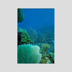 Tortola, British Virgin Islands,  Rectangle Magnet