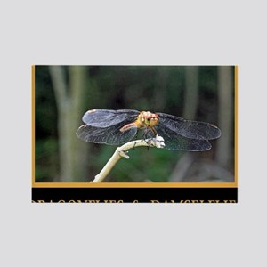 Dragonfly and Damselfly image Rectangle Magnet