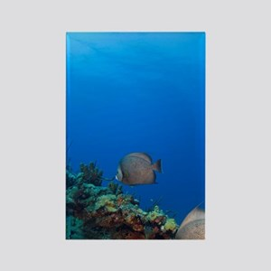 Grey Angelfish (Pomacanthus arcua Rectangle Magnet