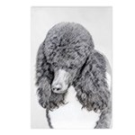 Standard Poodle (Parti) Postcards (Package of 8)