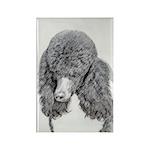 Standard Poodle (Parti) Rectangle Magnet (10 pack)