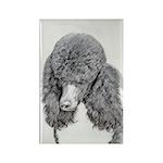 Standard Poodle (Parti Rectangle Magnet (100 pack)