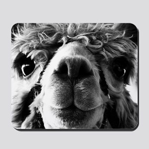 11x11 say cheese Mousepad