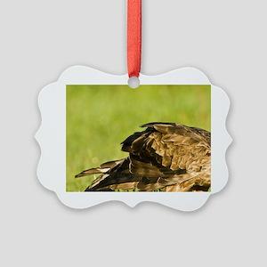 Karamea. Australasian Harrier (Ci Picture Ornament