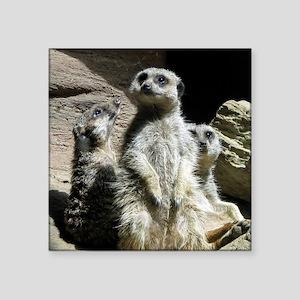 """meerkats Square Sticker 3"""" x 3"""""""