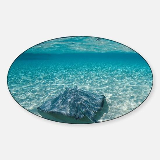 Underwater view of Southern Stingra Sticker (Oval)