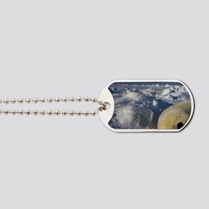 Gulf of St. Lawrence. Harp Seal (phoca gr Dog Tags