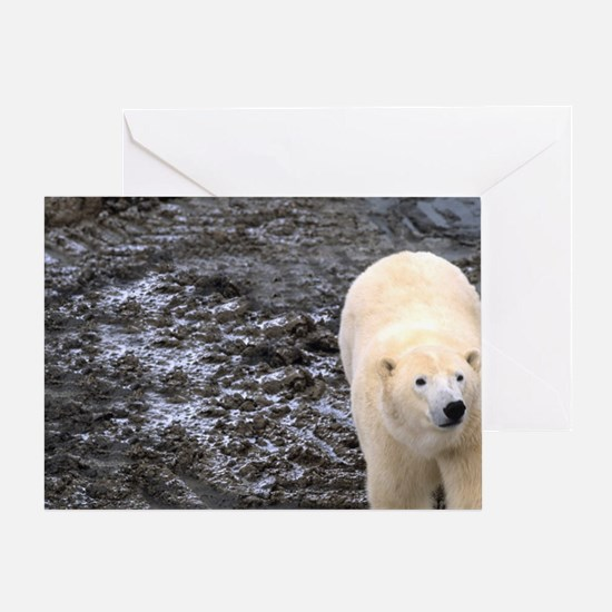 Polar Bear walking close to the bugg Greeting Card