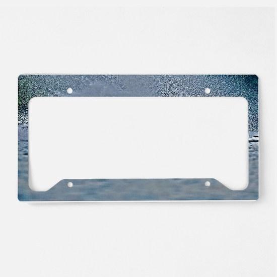 D1203-039hdr License Plate Holder