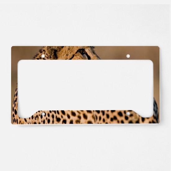 Cheetah4-large License Plate Holder