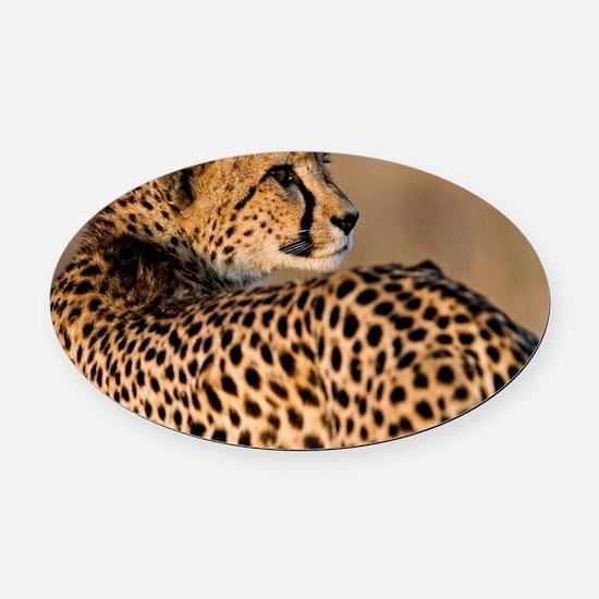 Cheetah4-large Oval Car Magnet
