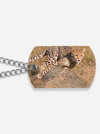 Cheetah cub Dog Tags
