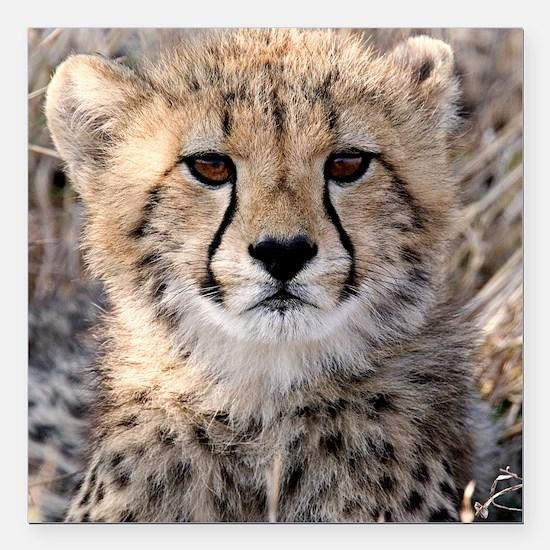 "Cheetah Cub4-1large Square Car Magnet 3"" x 3"""