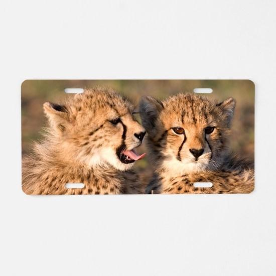 Cheetah cubs2 large Aluminum License Plate