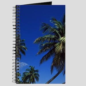 Palm tree lined beacho, San Juan, Isla Ver Journal