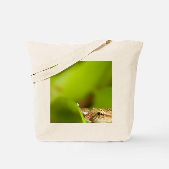 Close up of Common Coqui (Eleutherodactyl Tote Bag