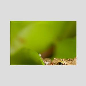 Close up of Common Coqui (Eleuthe Rectangle Magnet