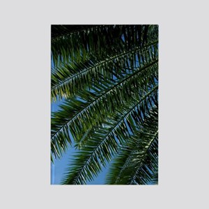 Charlotte Amalie. Palm tree with  Rectangle Magnet