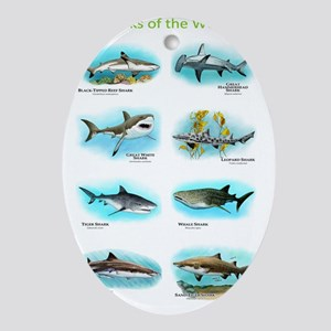 Sharks of the world Oval Ornament