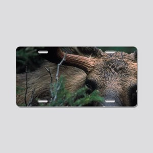 Bull Moose (Alces alces)ova Aluminum License Plate