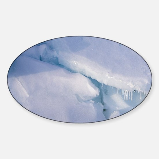 Gulf of St. Lawrence. Harp Seal (ph Sticker (Oval)