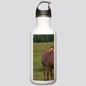 New Brunswick, Canada. Stainless Water Bottle 1.0L