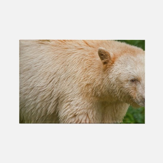 A white variety of the black bear Rectangle Magnet
