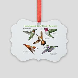Hummingbirds of North America Picture Ornament