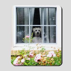 Zak in the windowA Mousepad